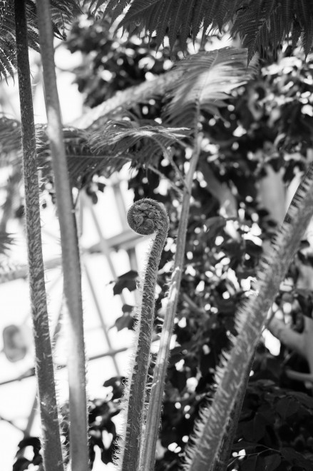 Tropical Ferns in Tokyo