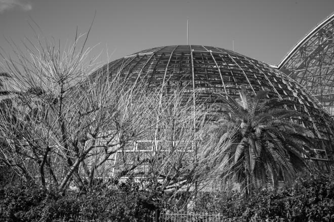 Yumenoshima Dome