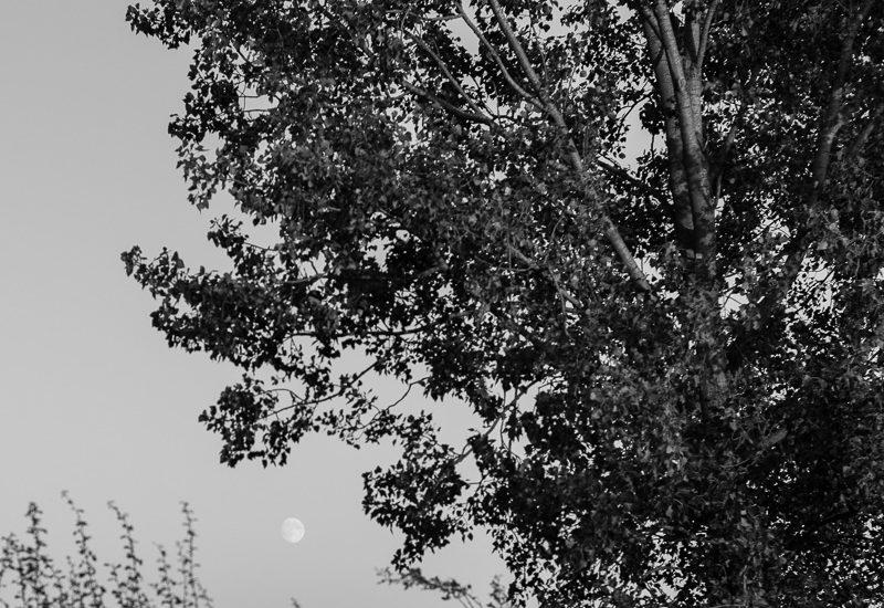 suffolk-evening-1012761